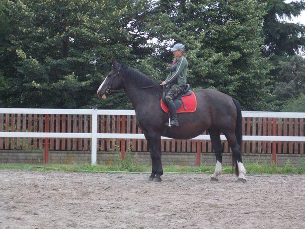 Klacz śląska/sp idealna do rekreacji,agroturystyki,koń rodzinny