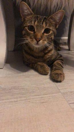 oddam wysterylizowaną kotkę 7 miesięcy