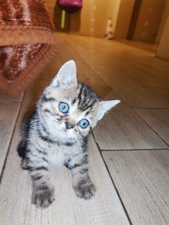 Котик не обычный окрас
