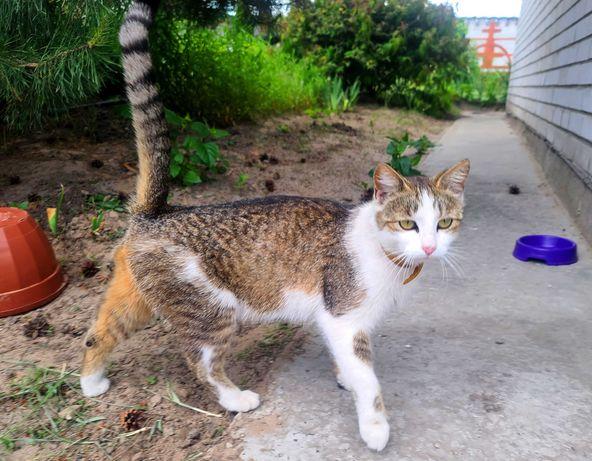 Грациозная юная Моника, 1 год, ищет дом! кошка кот котенок