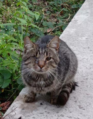 Несчастный полосатый кот надеется на чудо