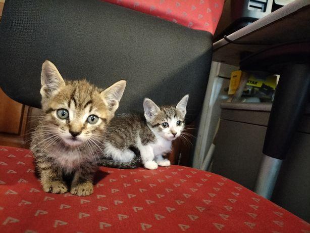 6 Gatinhos bebés para adoção 4machos 2femeas