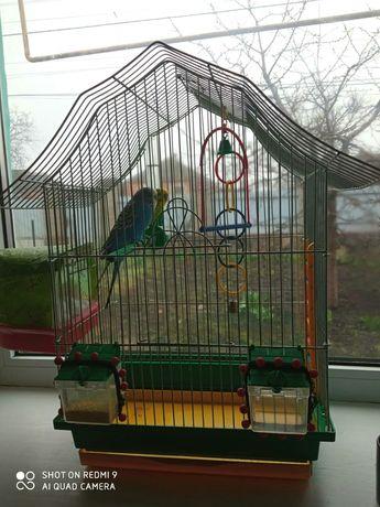 Волністі попугаї