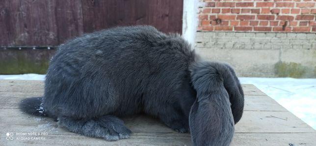 Tuszki z królików