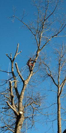 Arborysta, wycinka i pielęgnacja drzew trudnych Międzyrzecz i okolice