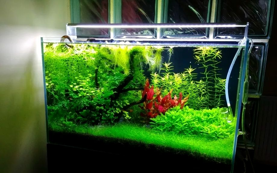 TRAWKA WYSYŁKA Akwarium Krewetkarium Trawa Trawnik Rośliny Roślinki Mińsk Mazowiecki - image 1