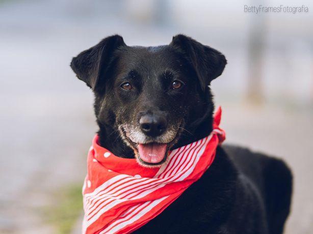 Rodzynek vel Lucky -cudowny czarny pies do pilnej adopcji