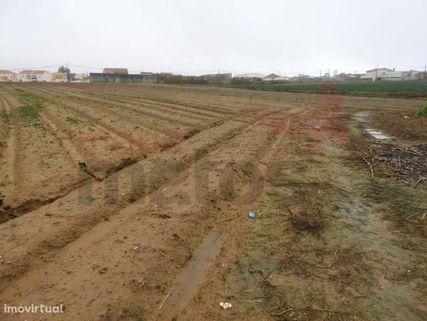 Terreno agrícola a cerca de 8 minutos de carro da Praia d...