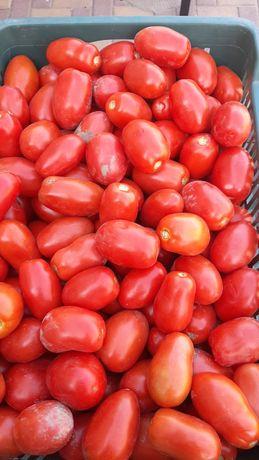 Sprzedam pomidory polne