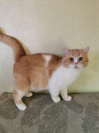 Шикарный котик красный тиккированный