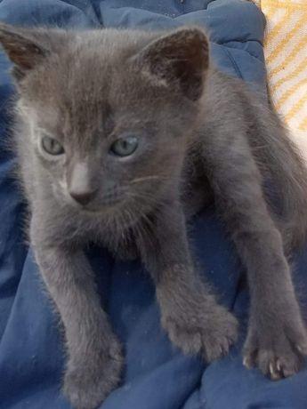 Котята в поиске дома!