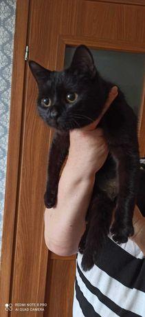Puma 1,5 roczna czarnuszka szuka domu  Iwona Tom.