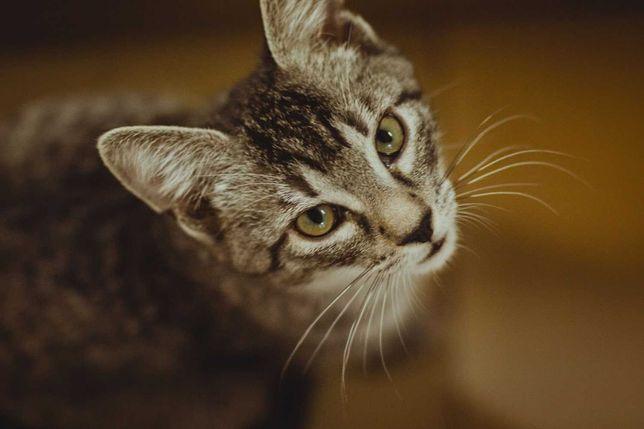 Cudna koteczka 4 miesięczna o imieniu Sylwia szuka domu