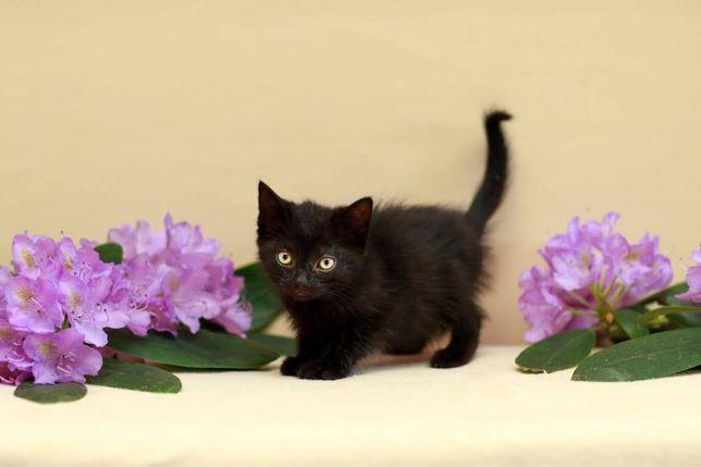 Bazylia - 2-miesięczna, przyjazna koteczka