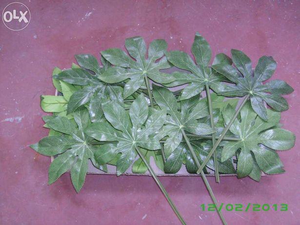 SIA - planta - folha de figueira e outras