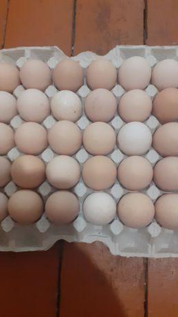 Инкубационное яйцо бройлер кобб и росс