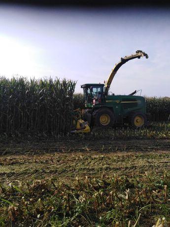 Zbiór kukurydzy na kiszonkę, koszenie na ziarno