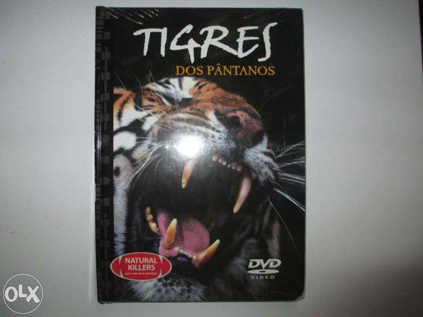 Dvd vida selvagem tigre