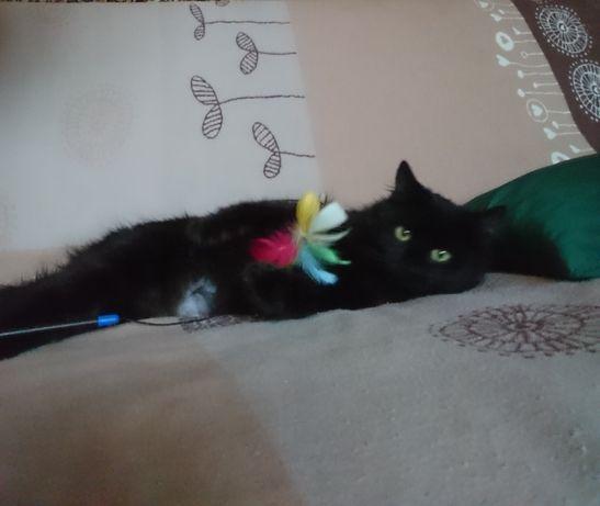 Маленькая черная принцесса. Котенок (кошечка) 6 месяцев.