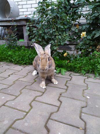 Продам кролі різного віку