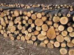 дрова твердых пород