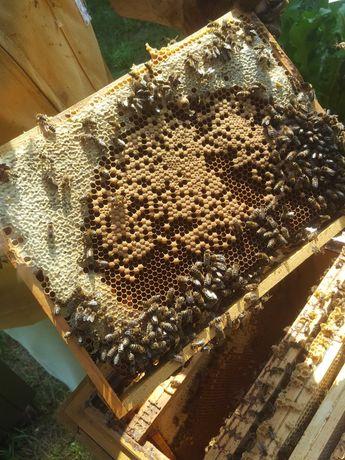 Sprzedam ule z pszczołami