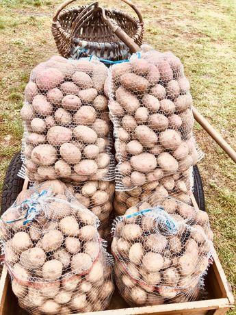 Ziemniaki  od producenta 20 zł Dostawa gratis