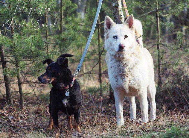 Adopcja wspólna! Uratuj ten uroczy duet!