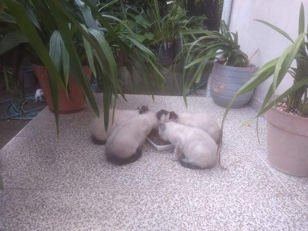 Gatinhos para adocao
