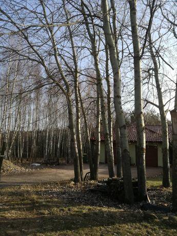 Wycinka drzew w zamian za drewno.Przecinka.itp.W-w,Oleśnica,Sycow+80km