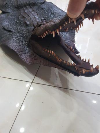 Шкура крокодила