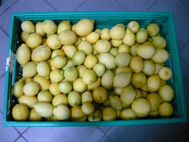 Cabaz de limão - do Pinhão - Região do Douro