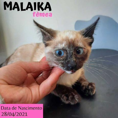 Gatinha 3 meses para adoção (Malaika)
