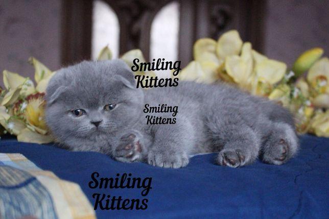 Эксклюзивные котята для Вас