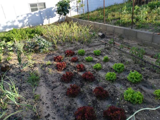 Serviços em agricultura; manutenção e criação de hortas