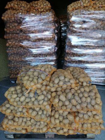 Ziemniaki GALA 45+