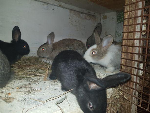 Кролики, молодняк