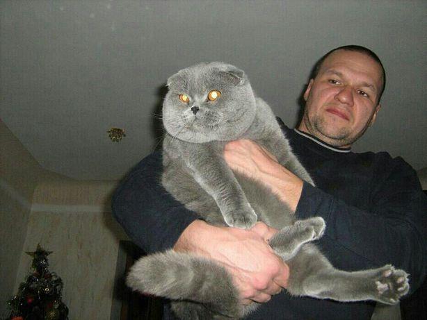 Вислоухие с документами котята ждут вас!