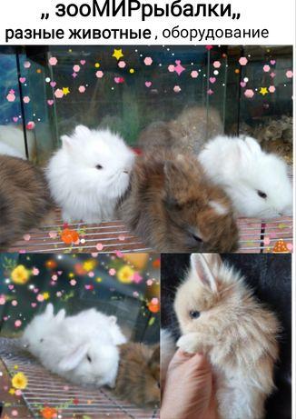 Декоративные кролики на любой вкус