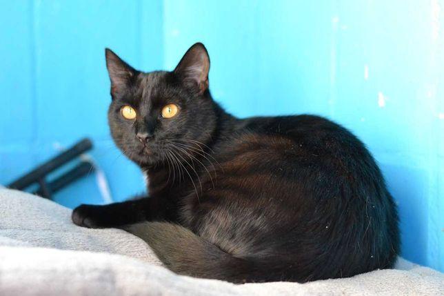чорний мордатенький юний котичок в пошуках домівки 6м