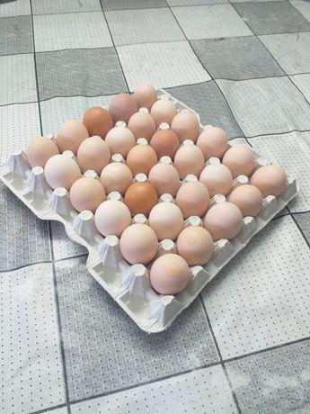 Jajka wiejskie świeże