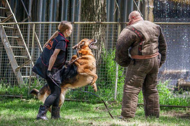 Дрессировка и передержка собак