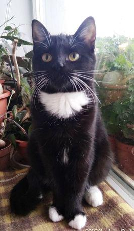 Отдам чёрно белого котёнка ,девочка , 6 месяцев , стерилизована