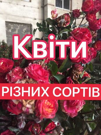 Роза (троянда), лаванда, гортензія, камелия, гибискус, магнолия.