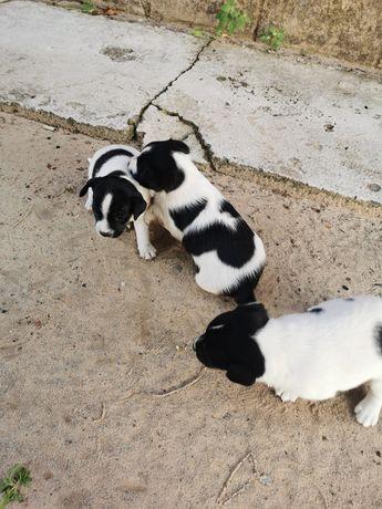 Отдам щенков в хорошие руки, два мальчика