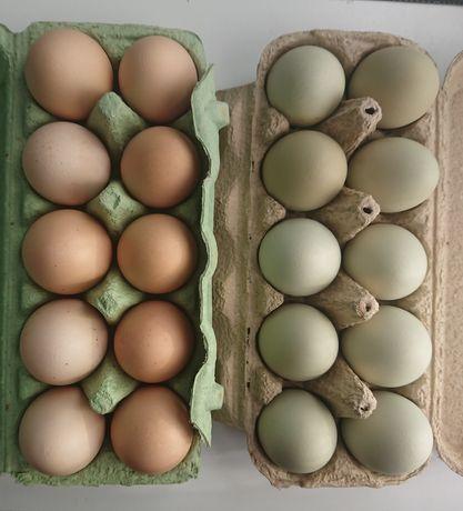 Jaja wiejskie kurze, zielononóżki