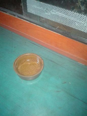 Miska dla gryzonia szczura chomika myszy itd