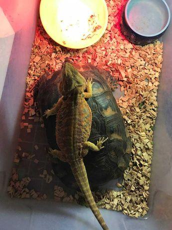 Змеи, варан, ящерицы черепаха крокодил