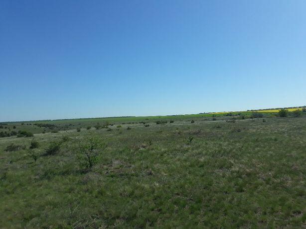 Субаренда пастбища 50 га. Для сена и выпаса скота или овец!