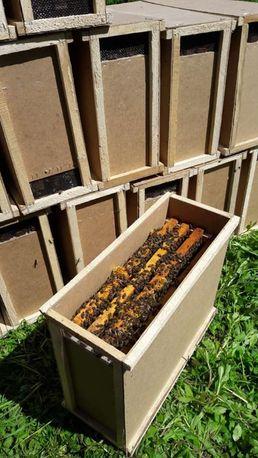 Бджолопакети на 2021 рік